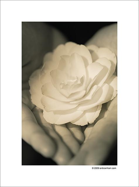 Hands - Flower
