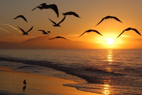 sunrise dawn santabarbara beach birds silhouette coast waves february 2006 nikon d100 california nikond100 geotagged free creativecommons