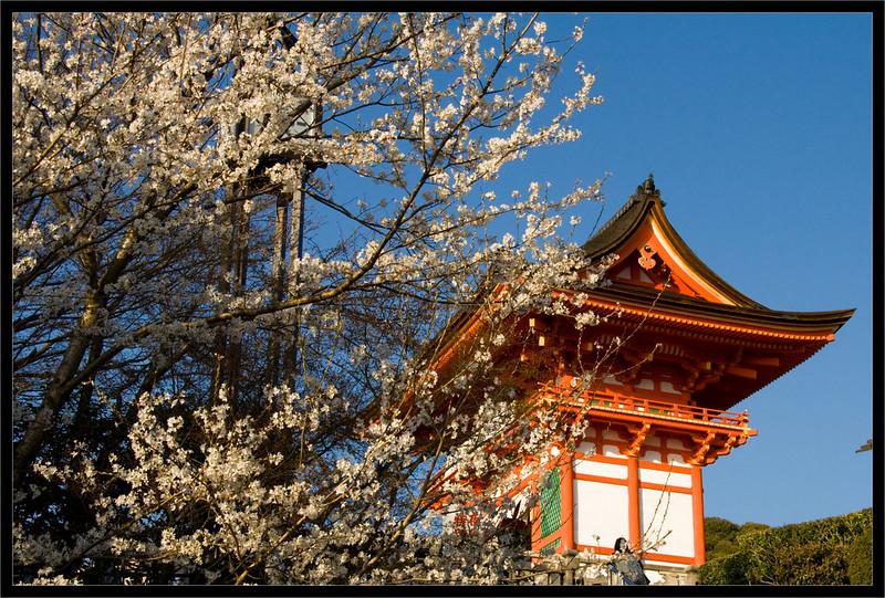 Kiyomizu Dera en la fiesta del cerezo