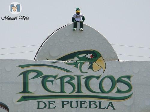 DSC01156 Pancho Perico mascota oficial del Club Pericos de Puebla por LAE Manuel Vela