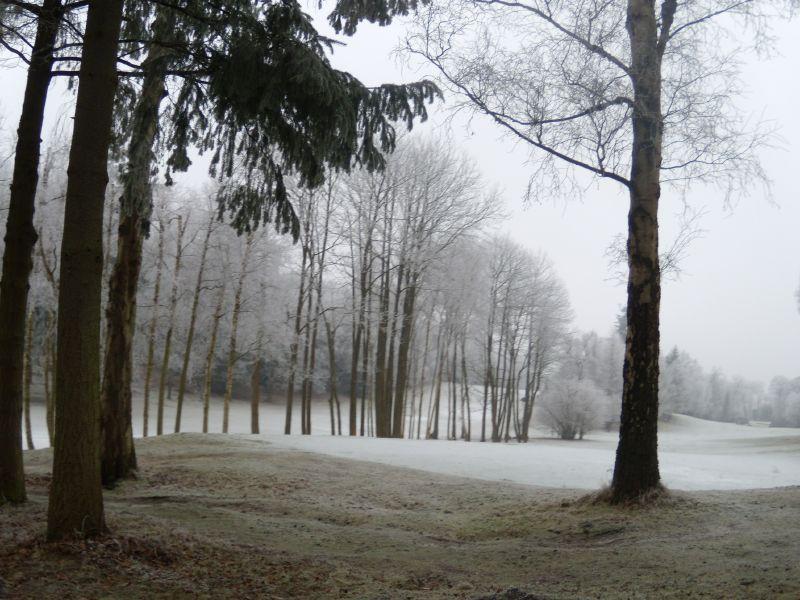 Line of trees Wanborough to Godalming