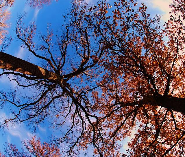 Evanston Autumn