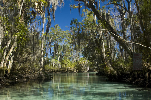 blue green water palms moss florida turquoise exploring bluesky springs spanishmoss cypress canoeing cypresstrees clearwater crystalriver northflorida greentrees northwestflorida cabbagepalms threesisterssprings