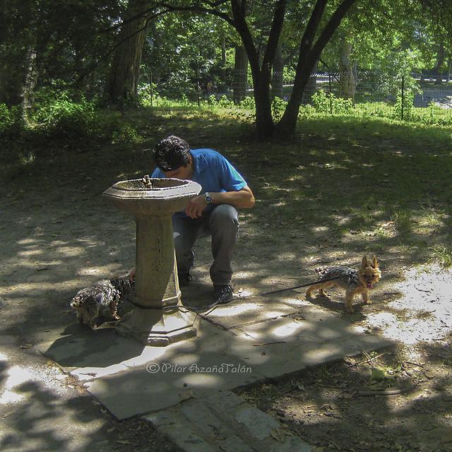 Los perritos tienen sed - Central Park