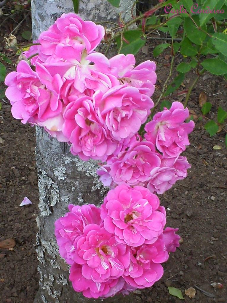 Resultado de imagem para muita flor cor de rosa