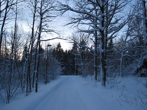 winter snow norway norge vinter eik tønsberg snø