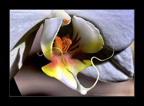 fabulous wmp simplyflowers golddragon citrit ilovemypics
