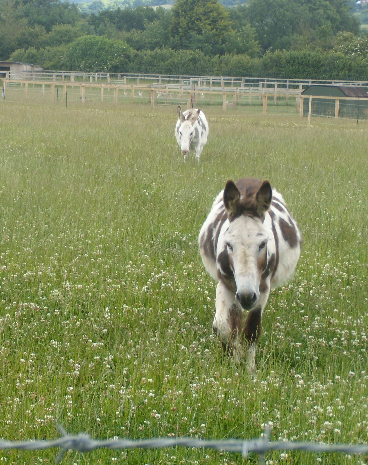 Donkeys Saunderton Figure of 8. Bledlow loop