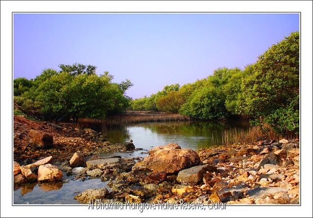 Al Dhakhira Mangrove Nature Reserve, Al-Khore  Qatar