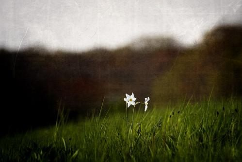 flowers field grass landscape spring afternoon dof connecticut ct hills harkness wateford giantonio kgiantonio kengiantonio