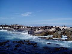 seals island