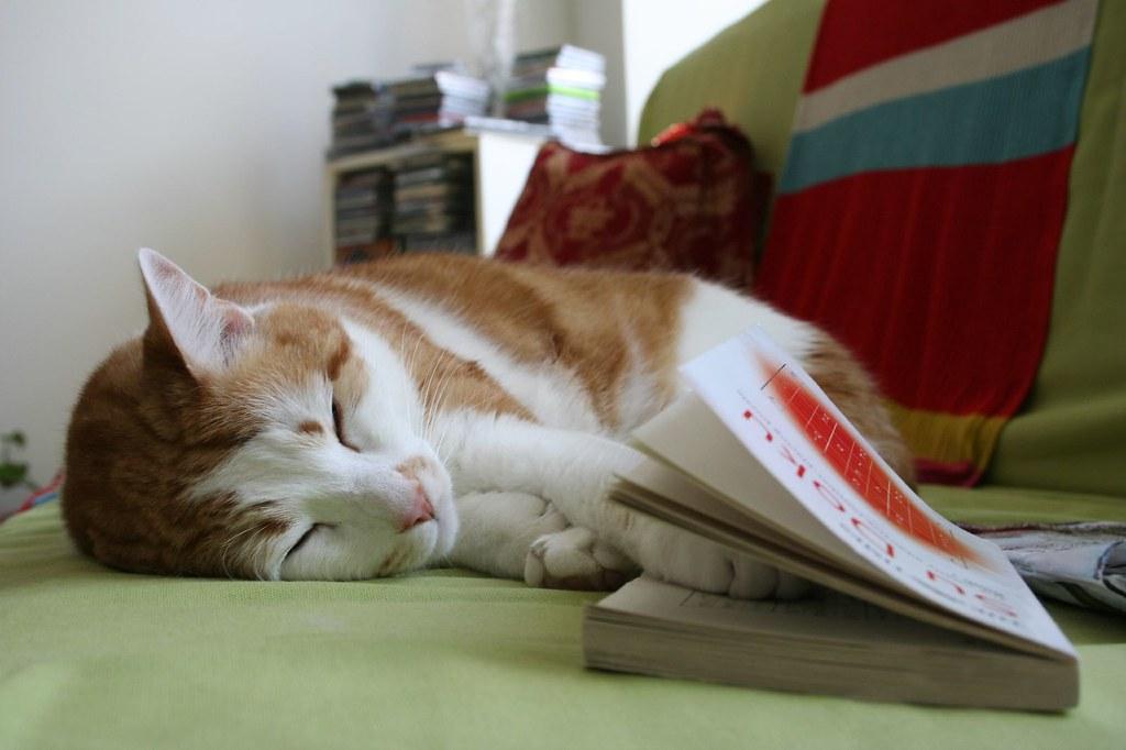 Smart cat doing sudoku