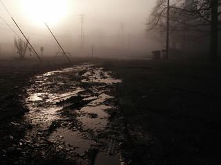 misty morning | by elaine faith