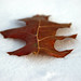 Winter Leaf by Joe Thorn