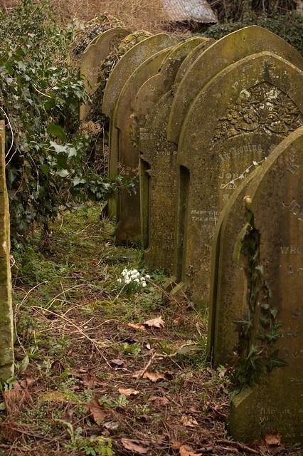 imgp8277 - Graveyard Snowdrops