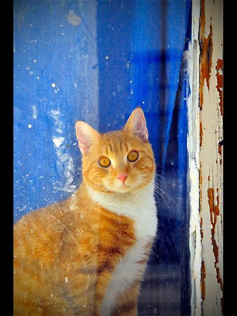 Barrio kitty