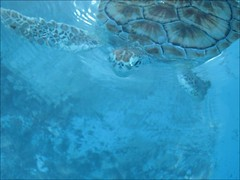 Tortugranja, Isla Mujeres, tortue blanche | by endirectdesiles