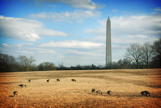 Geese on the Northwest Rectangle