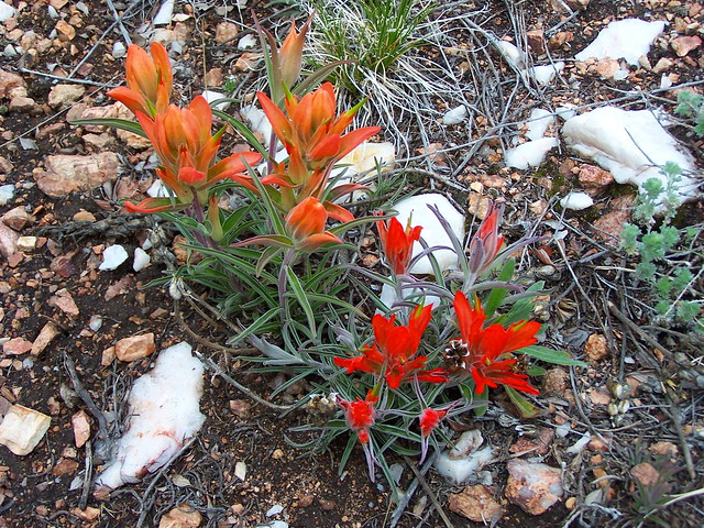 FIREY WILDFLOWERS