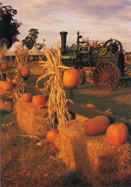 Antique Tractor & Pumpkins Postcard