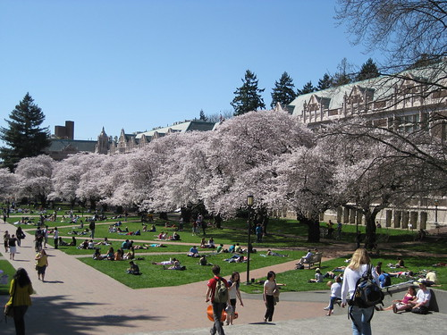 UW Quad cherry trees | by gull@cyberspace.org