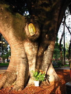 Todo árbol es un altar = Every tree is an altar  @ Oaxaca 2009