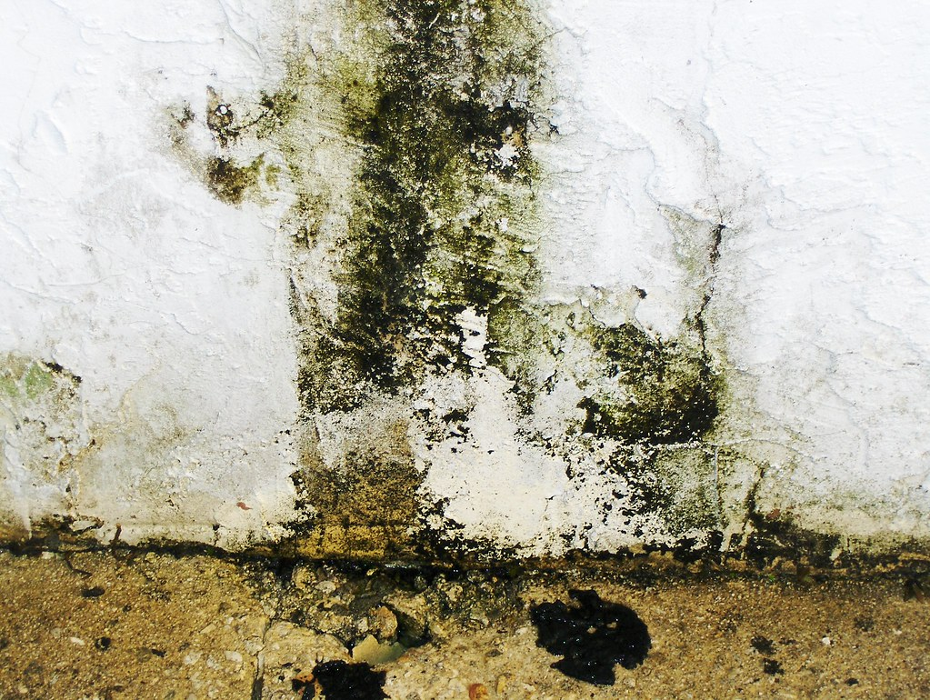 Image result for mould