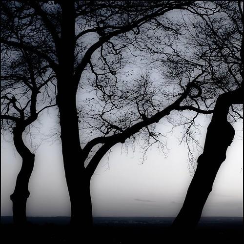 wood blackandwhite bw mist tree monochrome silhouette nationaltrust fp daruma reigate gattonpark canon35f14l reigatehill xpl canon40d viewtowardsgatwickairport haveyounamed40datall heygoodmorning