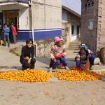 這是柑子收成的季節