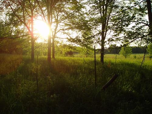 trees sunset grass spring