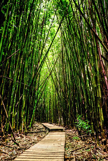 Bamboo Forest | by Clint Sharp