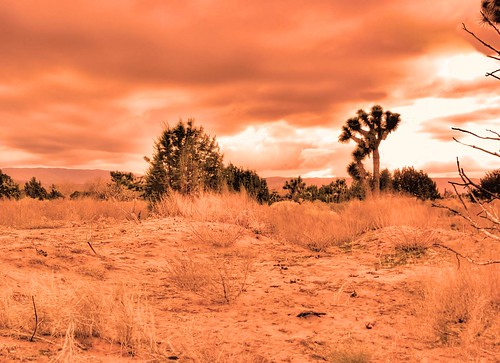 trees sunset tree nature desert joshuatree mojave soe juniper tumbleweeds mojavedesert mohave desertsunset junipertree mohavedesert platinumheartaward quantummottle2 joelach