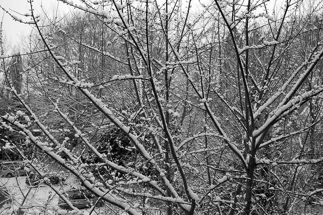 imgp8084 - Some Snow