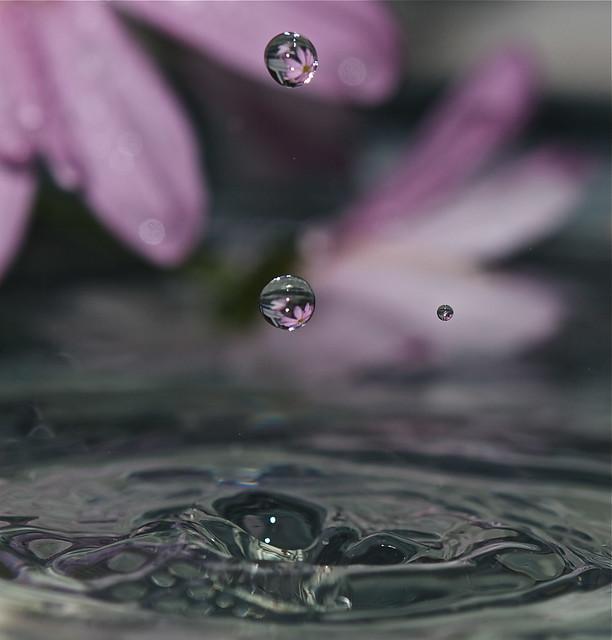 Flowering the Waters