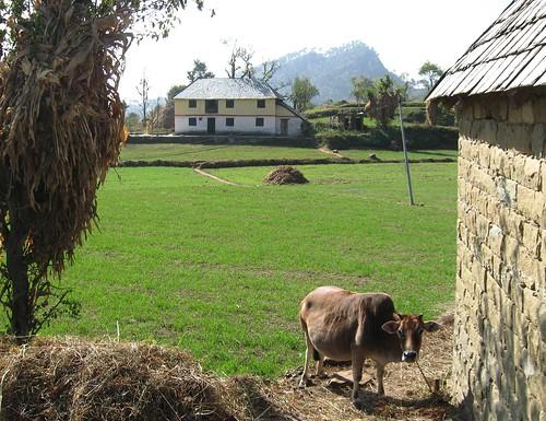 india farm farming farmland hills himachalpradesh rewalsar theindiatree rawalsar