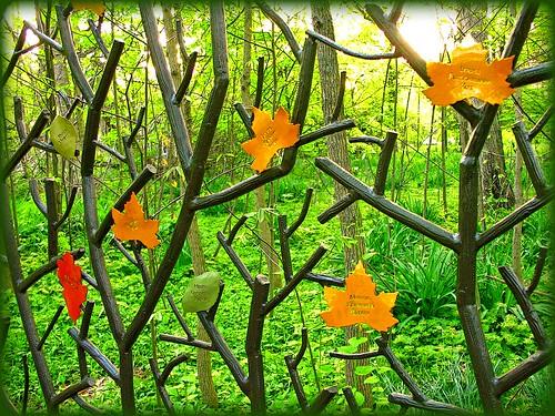 woods magic gone tribute magical soe wavygravy supershot anawesomeshot delitefulimage mayorspick