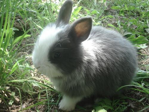 little rabbit | by °linda°!°