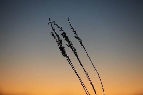 sunset floridaeverglades southflorida alligatoralley iphotorating0