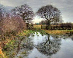 Flooded Field HDR