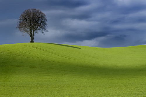 One Tree Hill Too | by wentloog