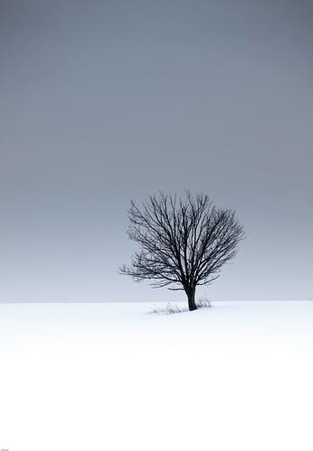 tree landscape lone snowscape 5dmark2ii 5dmk2mkii