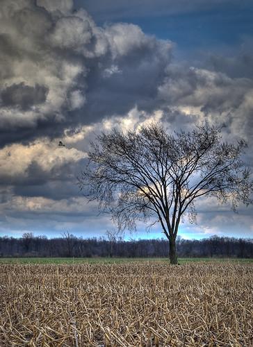tree clouds cornfield explore lonelytree blueribbonwinner d80 vosplusbellesphotos