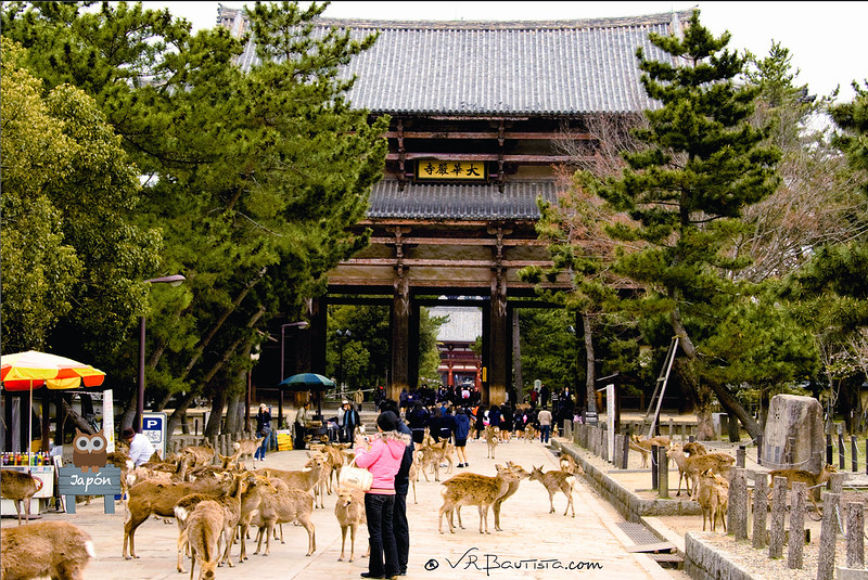 Nandaimon (南大門, Gran puerta del sur)