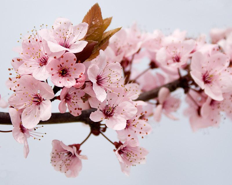 La Primavera está llegando / The Spring is arriving