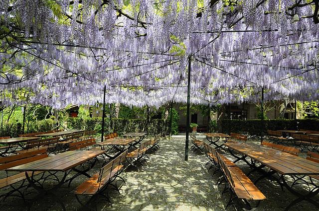 wine heaven: Villa Sceriman - nel cielo del vino