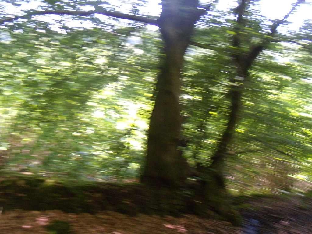 In the woods Haslemere round walk