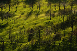 Shadows on the green | by keepwaddling1