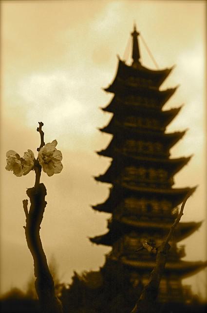 Towering... Flowering...