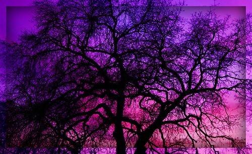 pink blue sunset sky black tree silhouette purple branches