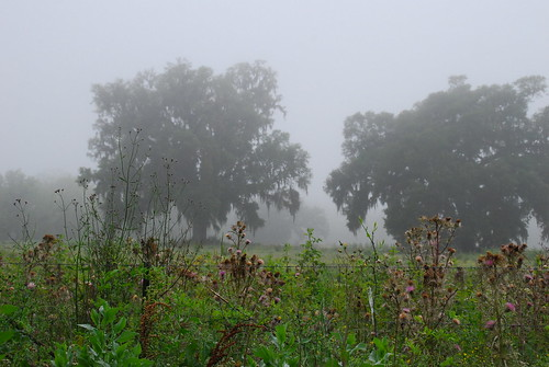 morning tree fog rural landscape oak nikon louisiana foggy scenic spanishmoss 2009 d60 7713 prairiehighway